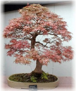 Fairy Garden bonsai tree